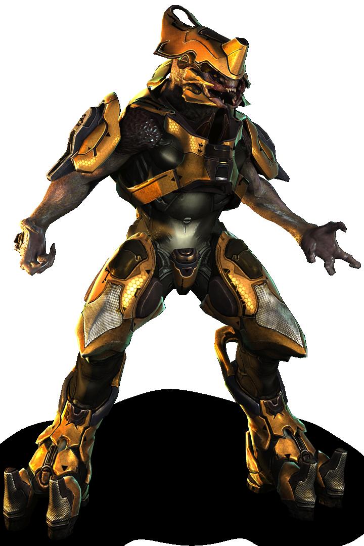 Sangheili Warrior - Halopedia, the Halo encyclopedia